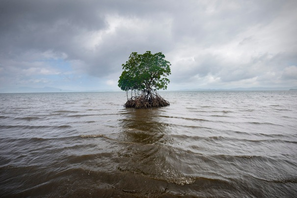 Climate change / sea-level rise in Fiji
