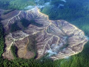 Deforestation in the rainforest.
