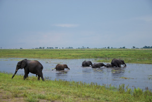 Chobe National Park. The water may be a source of antibiotic resistance bacteria.
