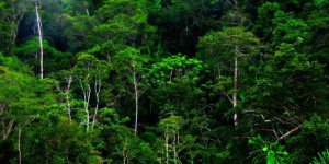 Tropical rainforest the size of India will be felled by 2050.